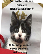 Free Feline Friday