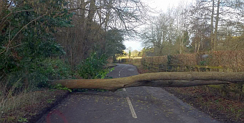 Downed tree on county road