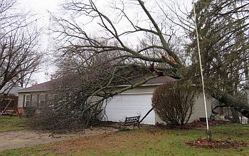 Flood_tree_2